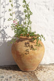 Ancient spanish terracotta flowerpot. With rose flower stock photography