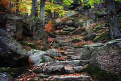 Ancient Stairs in Mountain Forest Royalty Free Stock Photo