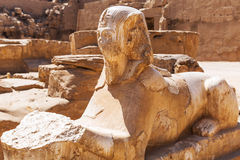 Ancient statue of sphinx in Karnak temple Stock Images