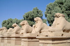 Ancient statues of Ram-headed sphinxes in Karnak temple Stock Image