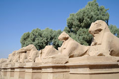 Ancient statues of Ram-headed sphinxes . Royalty Free Stock Photography
