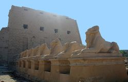 Ancient statues sphinxes Royalty Free Stock Photos