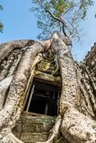 Ancient stone door and tree roots, Ta Prohm temple stock photo