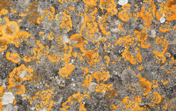 Ancient stone with lichens, detail Royalty Free Stock Photos