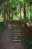 Ancient stone path in the forest Royalty Free Stock Photo