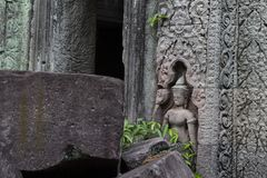 Ancient stone ruin in Angkor Wat temple. Stone carved human figure and floral. Khmer heritage temple ruin in jungle. Angkor Wat architecture detail. Asia royalty free stock photography