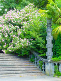 Ancient stone staircase. Overgrown with bushes and flowers Royalty Free Stock Images