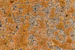 Ancient stone surface Stock Photography