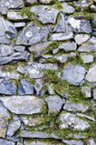 Ancient stone wall and moss in a castle in italy Royalty Free Stock Image