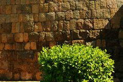 Ancient stone wall texture with plant . Ancient temple Gangaikonda Cholapuram-UNESCO World Heritage centre known as the `Great Living Chola Temples. Gangaikonda royalty free stock photography