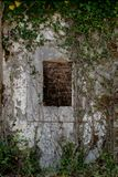 Ancient stone wall with window and old ivy climbing on it. Aband Royalty Free Stock Photos