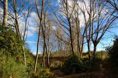 Ancient stones bridge. Ancient abandoned stones bridge with tree - winter Royalty Free Stock Image