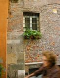 Ancient  street Lucca tuscany Royalty Free Stock Photography