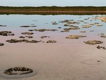 Ancient Stromatolites Royalty Free Stock Photography