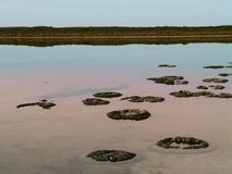 Ancient Stromatolites Stock Photo