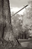 Ancient Sword will thrust in a tree Royalty Free Stock Image