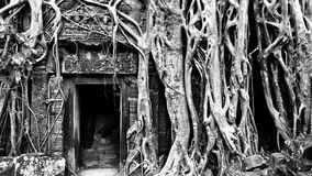 Ancient Ta Phrom Temple Royalty Free Stock Image