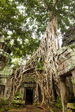 Ancient Ta Prohm Temple Stock Photo