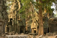 Ancient Ta Prohm temple at Angkor Wat Royalty Free Stock Images