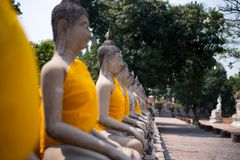 Row of buddha in selective focus stock photography