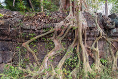 Ancient Temple of Bang Melea, Cambodia Royalty Free Stock Photo