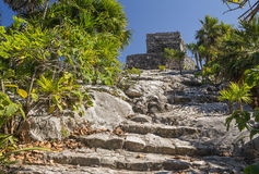 Ancient temple and destroyed stairs in archaeological site Tulum. Ancient ruined mayan temple and bright palms Stock Image