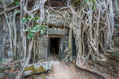 Ancient Temple Ruins of Ta Phrom, Cambodia Stock Photography