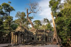 The ancient temple of Ta Prohm , Angkor , Cambodia royalty free stock images