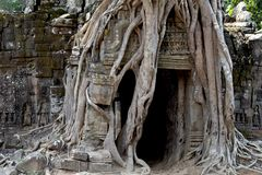 Ancient temple view near Angkor Wat, Siem Reap, Cambodia. Tree roots around temple ruin. Popular tourism destination place. Travel and sightseeing in Angkor Stock Photography