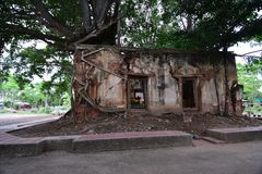 Ancient temple was covered with Bodhi tree Stock Photography