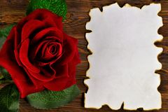 Ancient texture of old paper, background for writing and red rose. Vintage grunge paper with dark edges, rose flower Queen,. Background for literary composition stock images