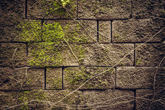 Ancient textured stone wall with moss and roots as ancient background Royalty Free Stock Photo