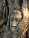 Ancient Thai Buddha Head. The head of Buddha at Wat Mahathat in Ayutthaya, Thailand Royalty Free Stock Images