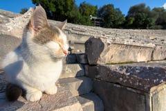 The ancient theater of Epidaurus or `Epidavros`, Argolida prefecture, Peloponnese. royalty free stock images
