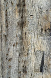 Ancient timber beam. Close-up macro of wooden beam on 14th century house in Suffolk, England Royalty Free Stock Photography