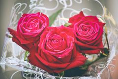 Three wrapped red roses royalty free stock photo