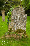 Ancient tombstone. An ancient tombstone with ivy Stock Photos