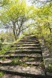 Ancient Tonglin Bridge Stock Photography