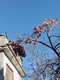 Ancient town of Shuhe, Yunnan persimmon royalty free stock image