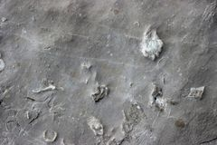 Ancient trace fossil sealife texture on the stone. Mediterranean coast region. Nobody royalty free stock photography