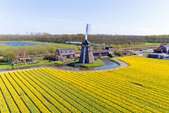 Ancient traditional windmill in the blossoming tulip fields in t Royalty Free Stock Photography