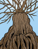 Ancient Tree. Reaching high into the sky Stock Photo