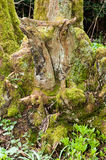 Ancient tree stump Royalty Free Stock Photography