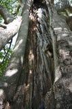 Ancient tree trunk - close-up stock photos