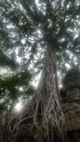 Ancient trees overgrowing Ta Prohm. Temple in Siem Reap, Cambodia Royalty Free Stock Images