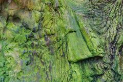 Ancient trees turn into stone Stock Photo
