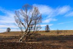 Ancient trees Royalty Free Stock Photo