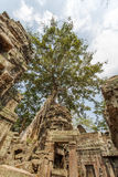 Ancient view of Ta Prohm temple, Angkor Thom, Siem Reap, Cambodia. Royalty Free Stock Image