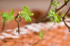Ancient vintage key on a tree branch, green young leaves. spring and summer vision. Copy space. Top view stock images