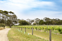 Ancient vinyard, Barossa Valley, Australia Royalty Free Stock Images